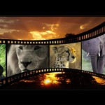 Movies,